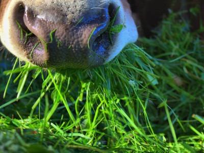 Allevamenti, foraggi e sostenibilità ambientale un equilibrio che si regge sull'alta qualità
